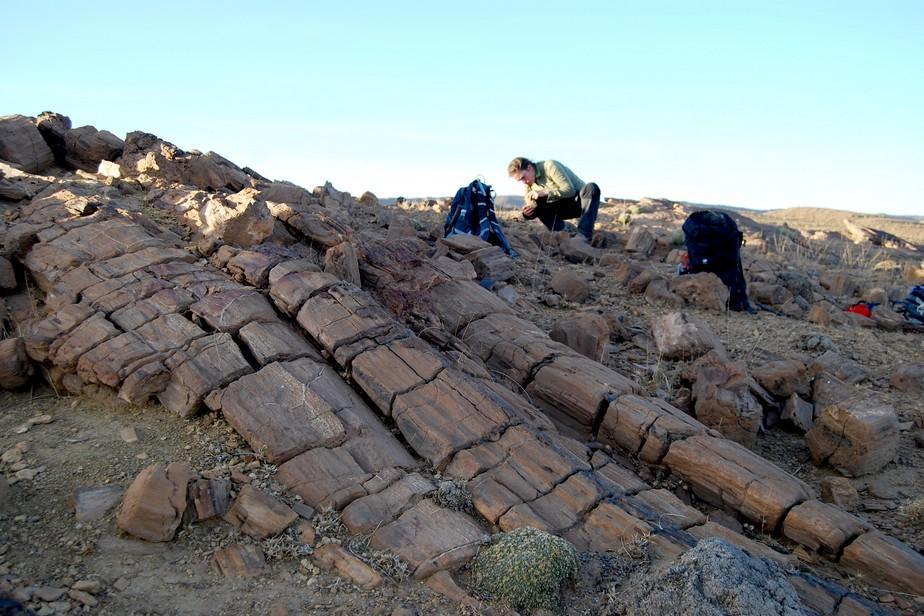 prospection anoual maroc