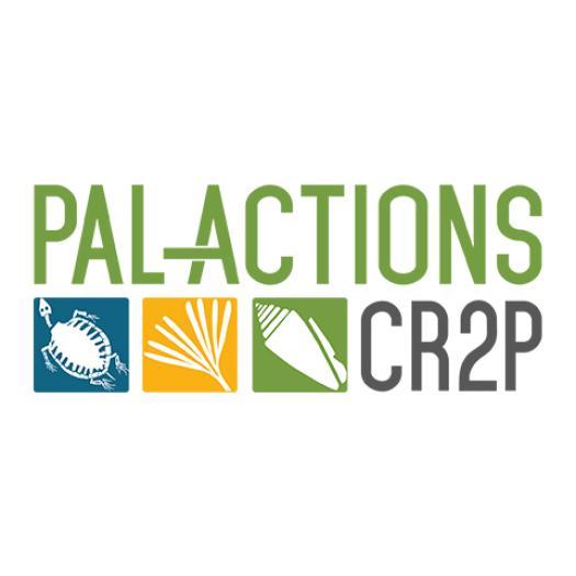 Palactions.jpg