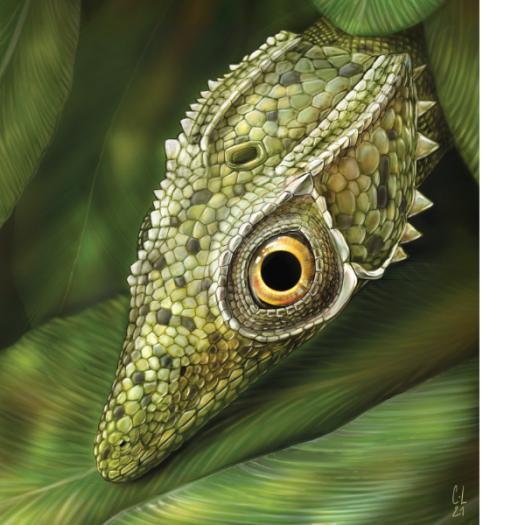 coelurosauravus_elivensis_ill_charlene_letenneur_sdweb.jpg