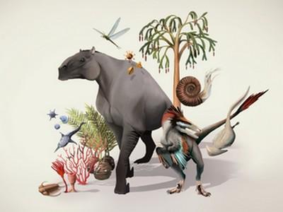 Collection de Paléontologie