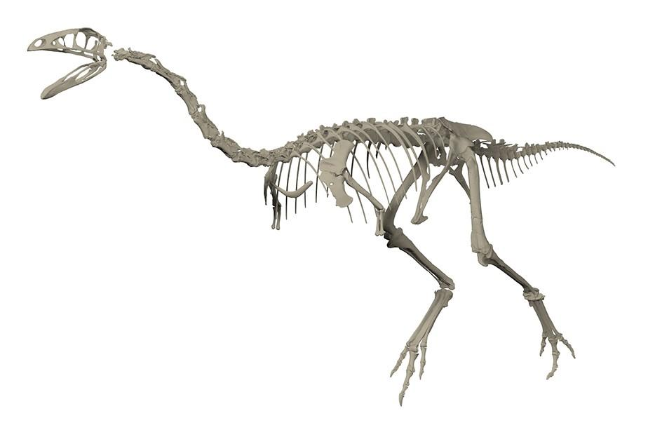 ornithomimosaure d'Angeac-Charente