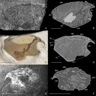 review-of-early-triassic-thylacocephala